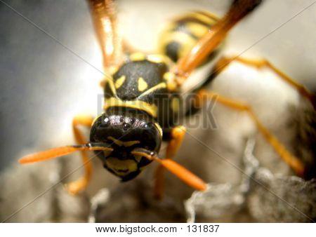 Wasp...(2)