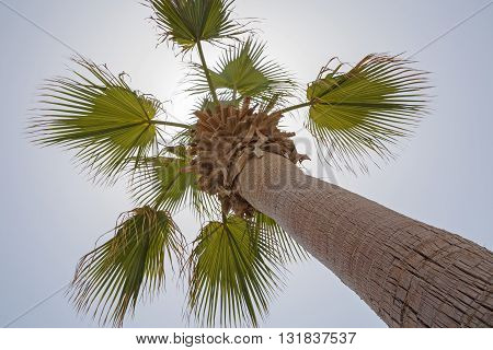 view on palm tree over blue sky