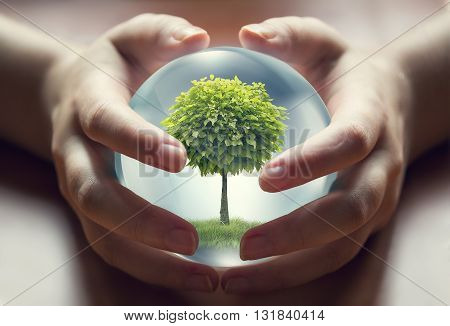 human hands holding a small tree environment concept image