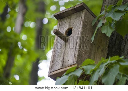 Nesting box or birfhouse on the tree in the forest. Close up shot.