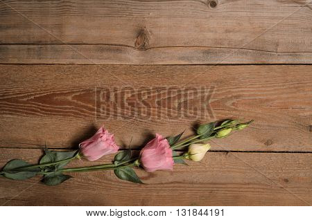 Beautiful pink eustoma flowers on wooden background