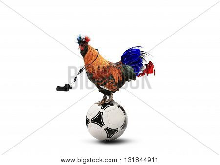 French colored rooster with big tail on a ball