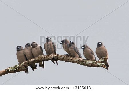 Beautiful Brown bird standing together in nature