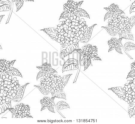 Seamless vector pattern with flowers hydrangeas. Black and white background. All elements are not cropped and hidden under mask.