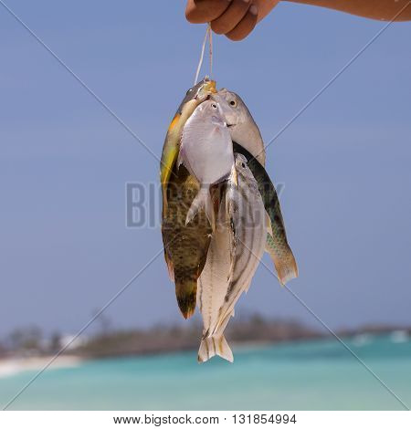 Fisherman holding fish catch against the sky. Close up