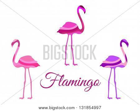 Flamingo. Flamingo isolated. Set of vector illustrations.