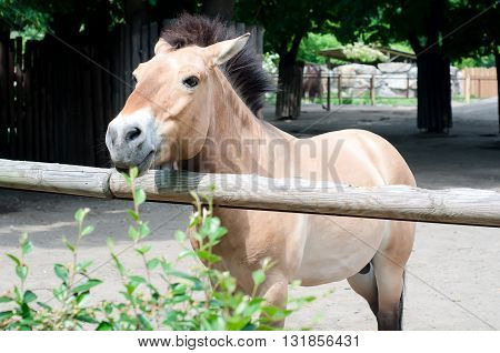 brown horse is in the small farm