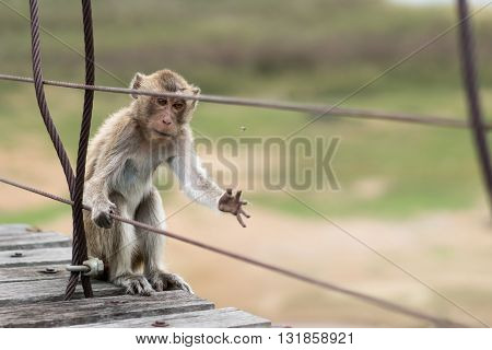 Hungry monkey wounded animal catching a fly to eat hunger or survival concept