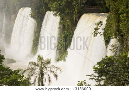 a lot of water in three iguazu falls with green forest and palms surrounding