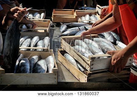 Camogli Liguria Italy - June 15 2015: Fishermans with a catch