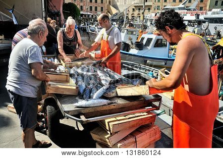 Camogli Liguria Italy - June 15 2015: Fishermans with a catch in Camogli port