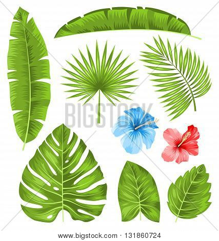 Illustration Set of Tropical Leaves, Collection Plants Isolated on White Background - Vector