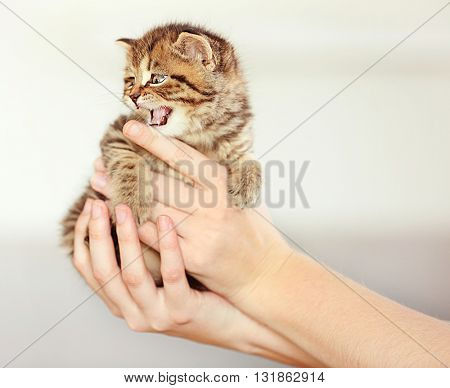 Woman holding small cute kitten