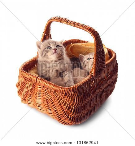 Small cute kittens in wicker basket, isolated on white