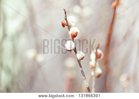 Branch with buds on blurred background