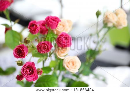 Bouquet of roses indoors, closeup