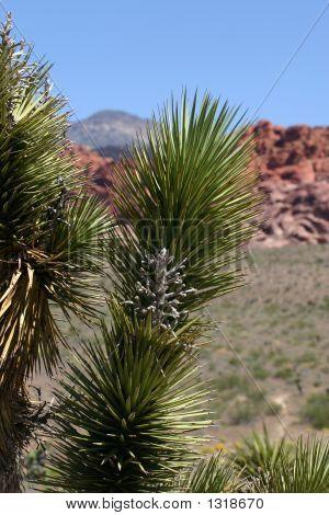 Cactus en roca roja