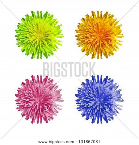 Blue pink green and orange dandelion flower top view