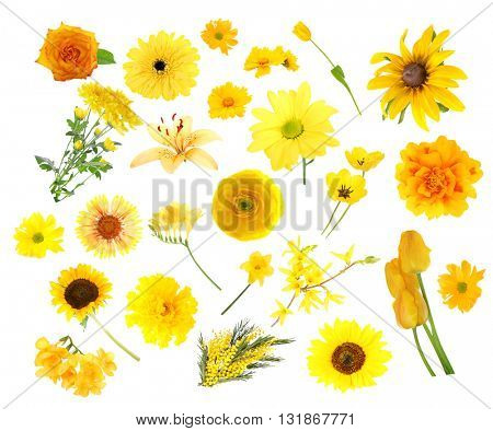 Collage of yellow color flowers, isolated on white