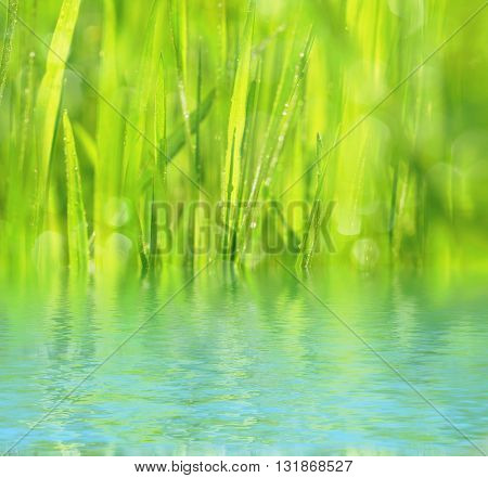 Natural background with green grass with morning dew and water
