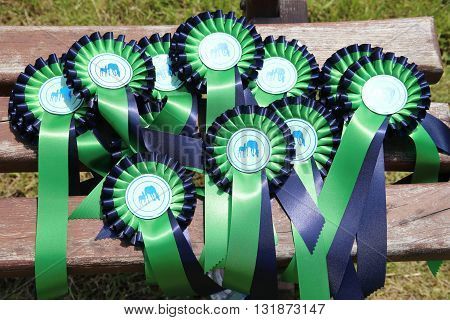 Group of four perfect equine rosette ribbons for prize winner horses