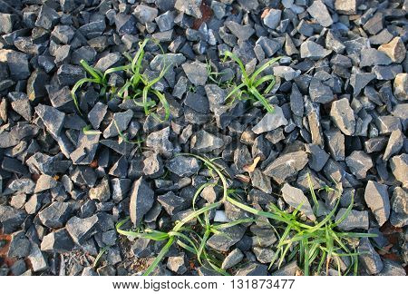 Close up photo of pebbles and grass bushes texture