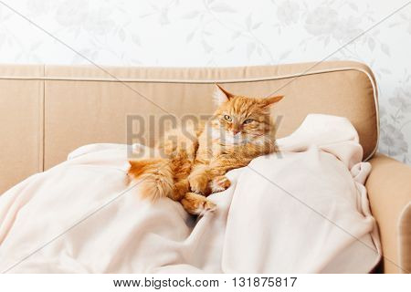 Cute ginger cat lying on a beige couch. Fluffy pet comfortably settled to sleep. Cozy home background with funny pet.