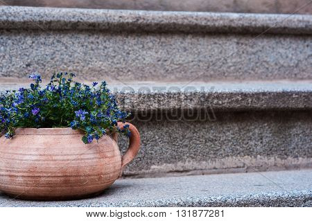 Small blue flowers in a clay pot on an old ladder