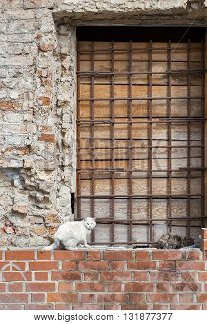 two cats sitting on the wall with window grilles