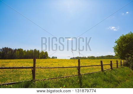 Corral for farm to cattle. Rural view flower meadow and fenced place for walking cows. Pastoral panorama on a paddock. Beautiful landscape of Sunny day. Field yellow dandelions to ruminant  livestock.