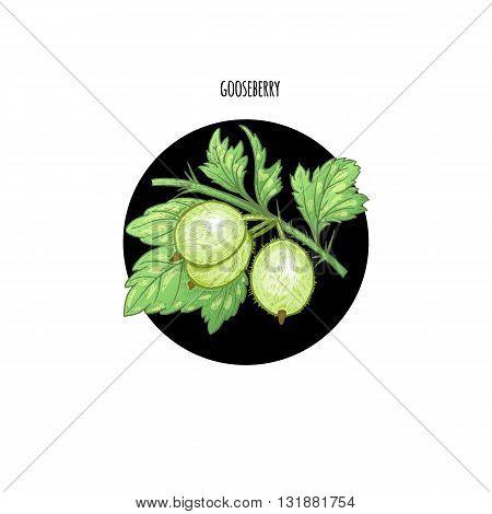 Stock Vector Gooseberry berries in a black circle on a white background. Design of packaging food products cosmetics shampoos health supplements.