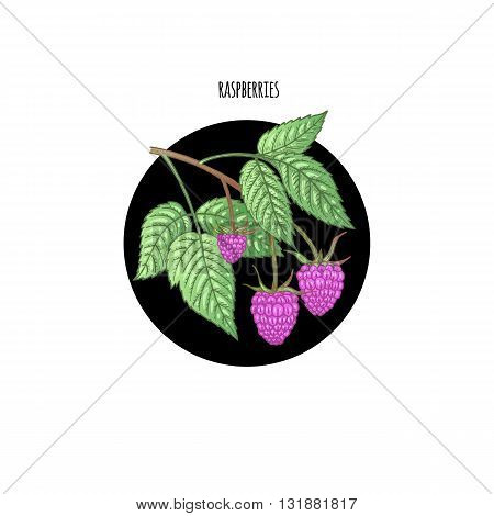 Vector illustration of a raspberry in a black circle on a white background. Design of packaging food products cosmetics shampoos health supplements.