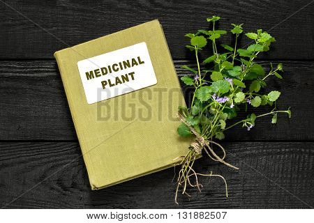 Medicinal plant Glechoma hederacea and herbalist handbook. Used in herbal medicine nutrition horticulture