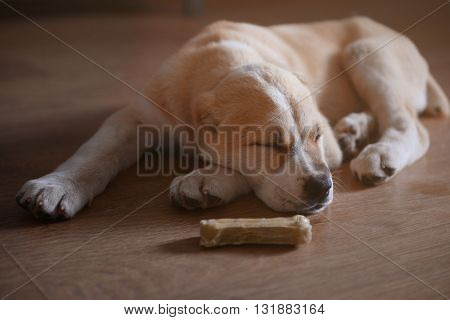 Central Asian Shepherd puppy sleeping on the floor