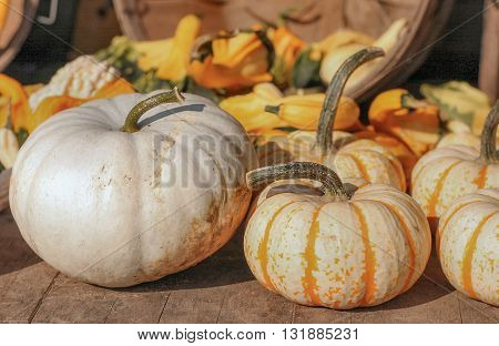 Fall pumpkins, squash, perhaps a ghostly pumpkin for Halloween