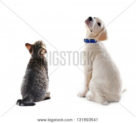 Cat and dog together, view from the back, isolated on white