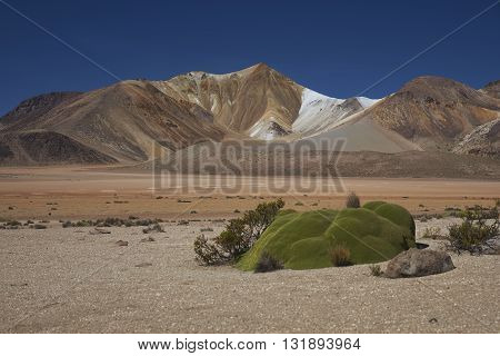 Colourful mountains at Suriplaza on the Altiplano of north east Chile. The green plants in the foreground are rare native cushion plants, Azorella compacta.