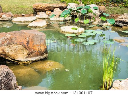 Chinese Garden with pond and rock, nature garden