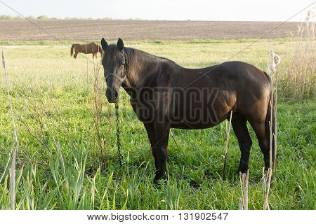 Two horses on green steppe pasture outdoors