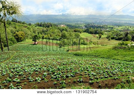 View Of Farm Terrace And Tomohon Town