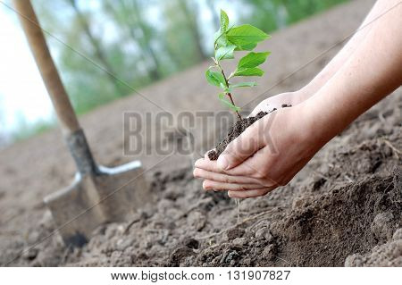 Plant in a hands of a human symbolizing new life