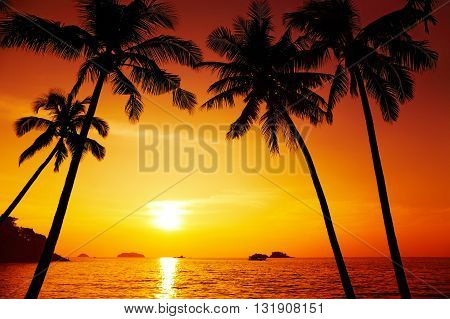 Palm trees silhouette at sunset Chang island Thailand