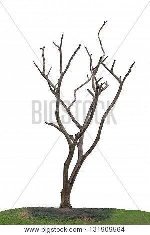 Dark And Burned Of Dead Tree Isolated On White Background.