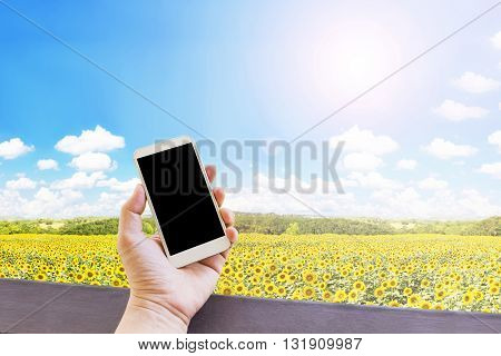 Hand Hold Blank Empty Screen Mobile Phone Or Cellphone In Relax Day At Sunflowers Field With Nature