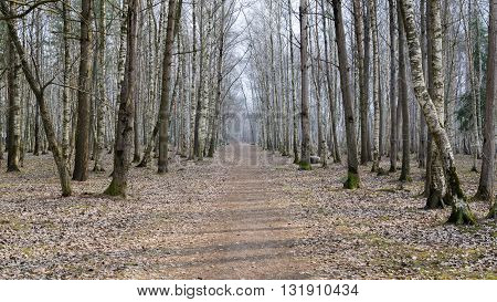 spring landscape with footpath in the woods