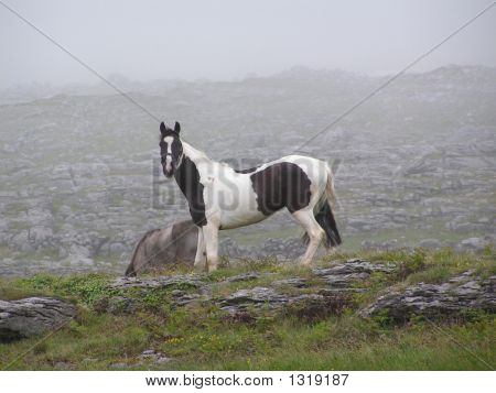 A Black And White Horse On  A Misty Mountain