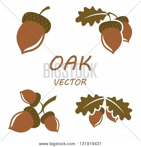 Vector flat oak icons set on white backgrounds