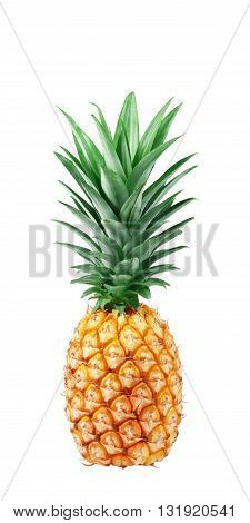 Pineapple isolated on white background. Fresh pineapple