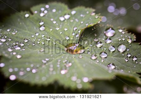 Leave and water drops details background selective focus