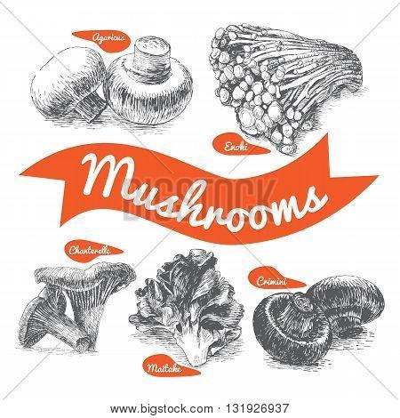 Vector illustrated Set #2 of Mushrooms. Illustrative sorts of mushrooms